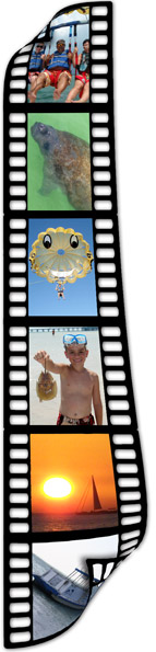 Home Film strip